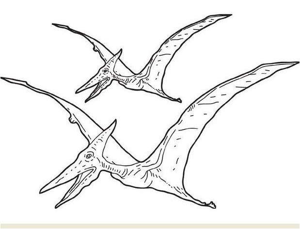 Dinosaur Pterosaur Coloring Page Game