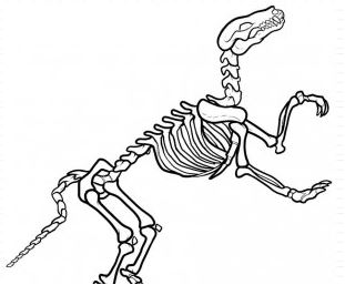 Dinosaur Bones 2 Coloring Page Game