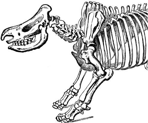 Dinosaur Skeleton Coloring Page Game