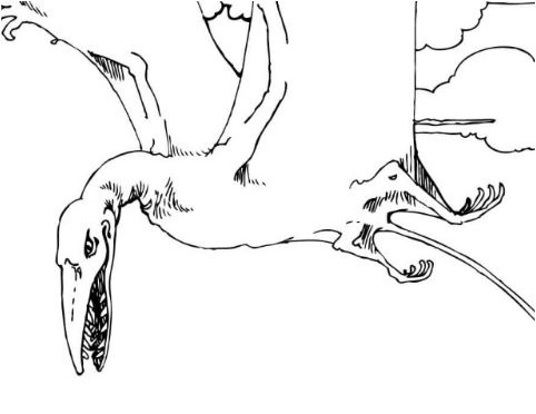 Rhamphorhynchus Jurassic Pterosaurs Coloring Page Game