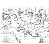 Dinosaur Coelophysis Bauri Coloring Page Coloring Page