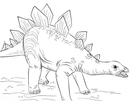 Young Stegosaurus From Dinosaur Coloring Page Game