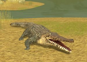 Lake Placid Croc Alley Game