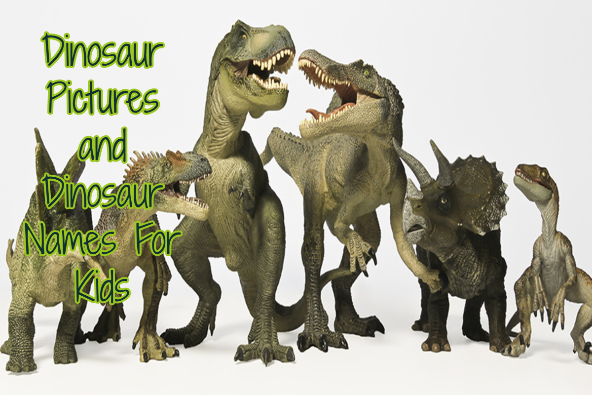 Dinosaur pictures and lessons that the children can receive