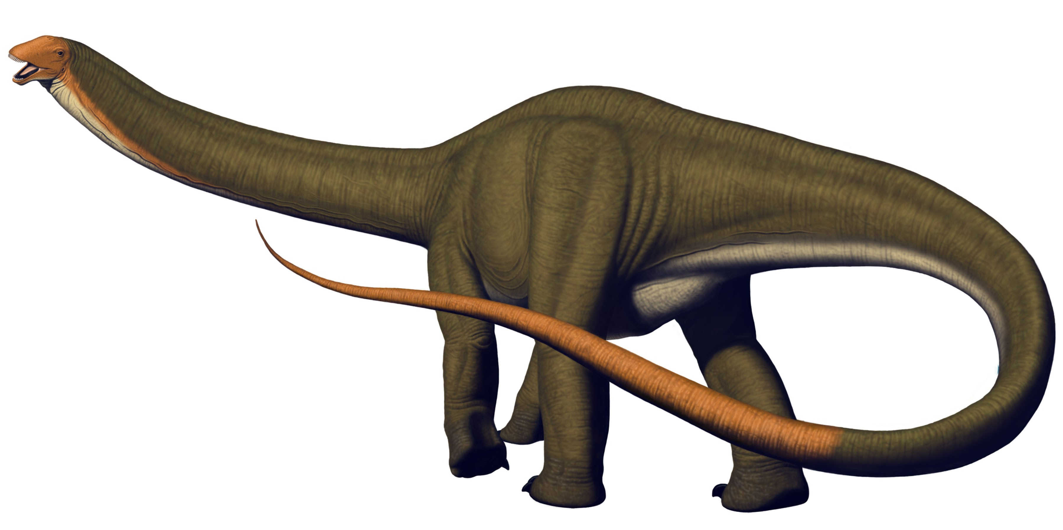 Apatosaurus Dinosaur Fact And The Ways To Make Coloring Them