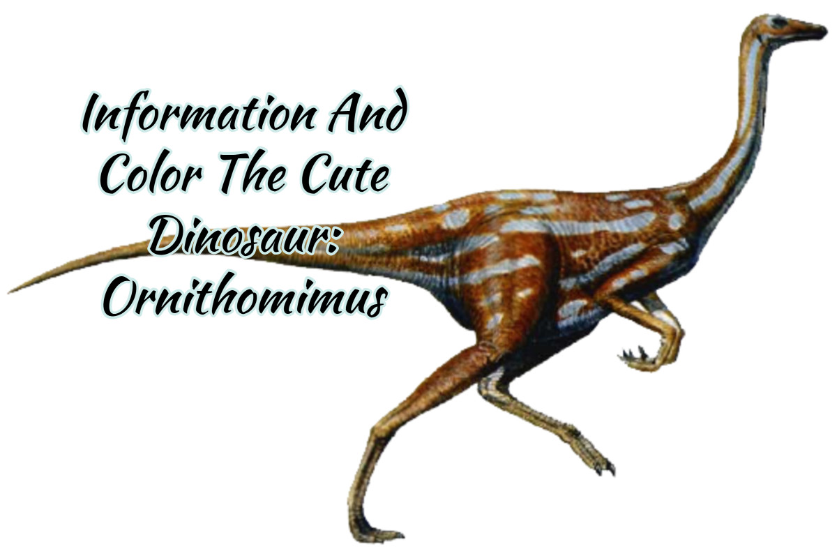 Information And Color The Cute Dinosaur: Ornithomimus