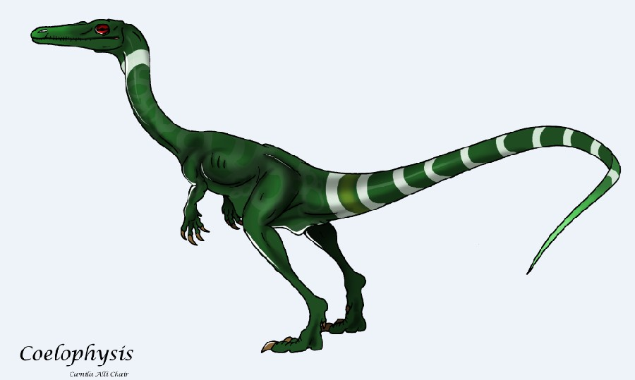 The Interesting Information About Coelophysis Dinosaur