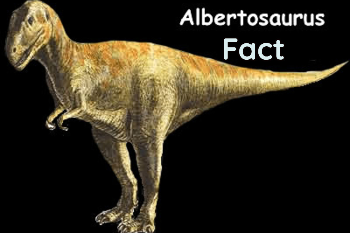 Albertosaurus Facts