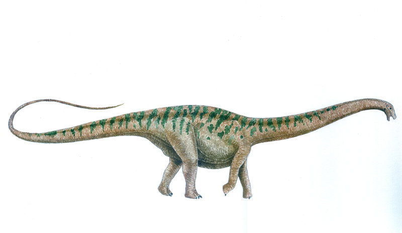 Apatosaurus Facts About the Deceptive Lizard