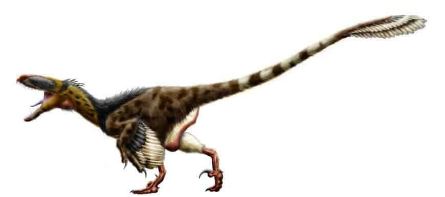Achillobator   A powerful predators dinosaur in the Late Cretaceous Period