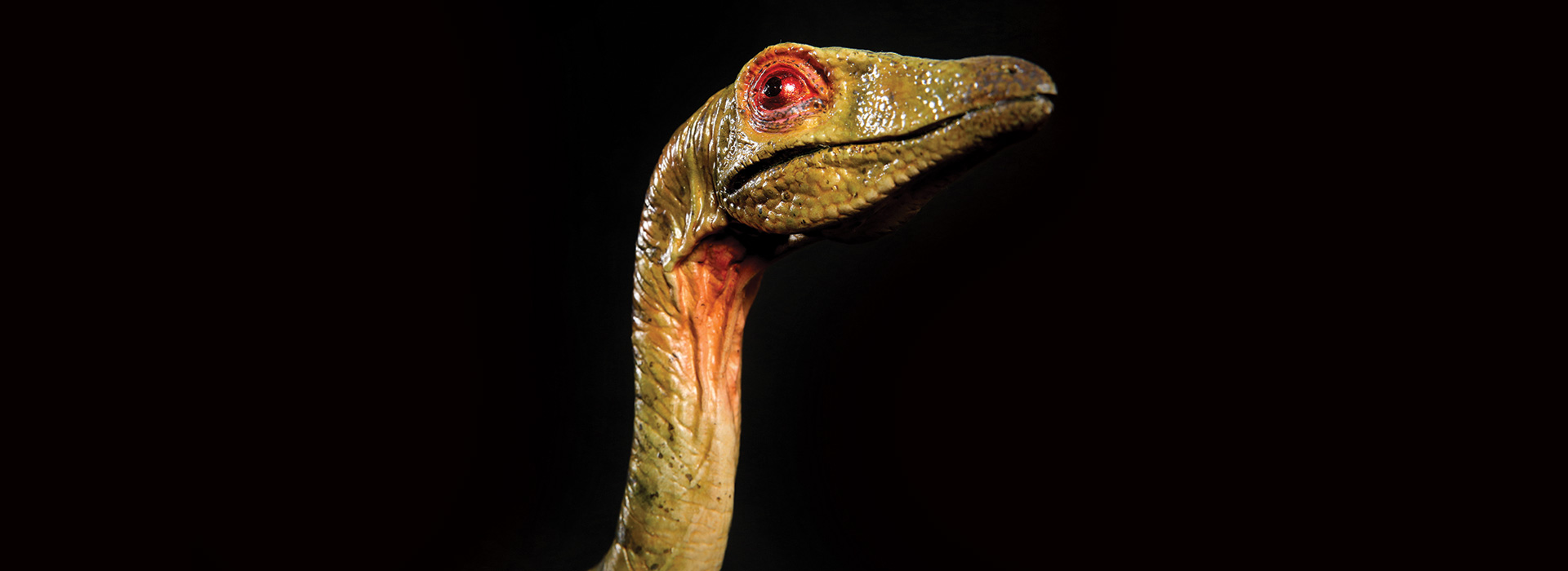 How much do you know about Compsognathus dinosaur