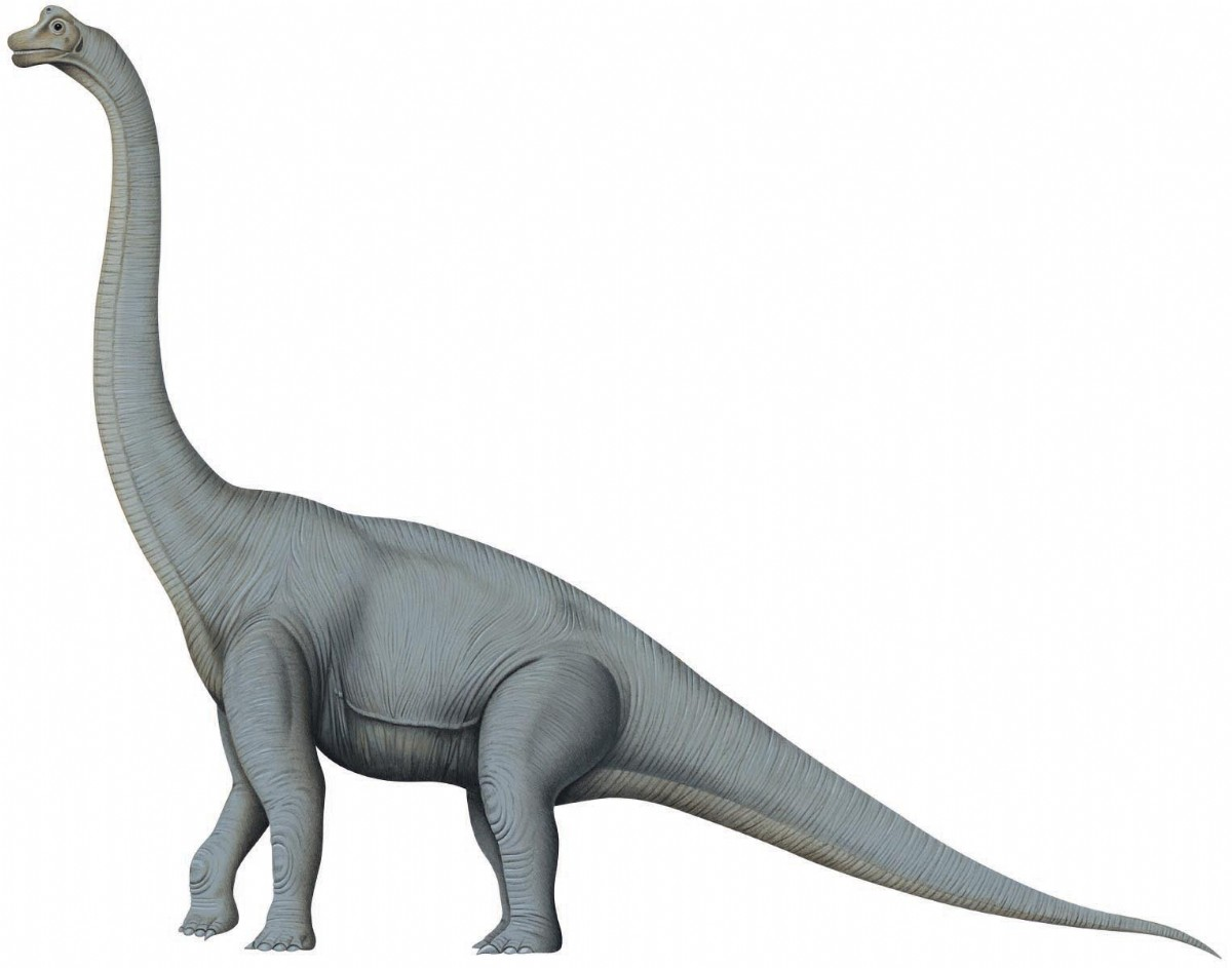 Interesting Facts About Brachiosaurus and Brachiosaurus Coloring Pages
