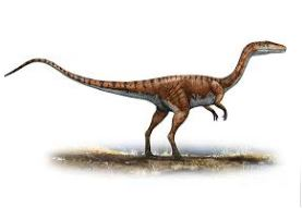 Dinosaur Coelophysis Picture