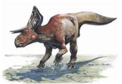 Dinosaur Zuniceratops Picture